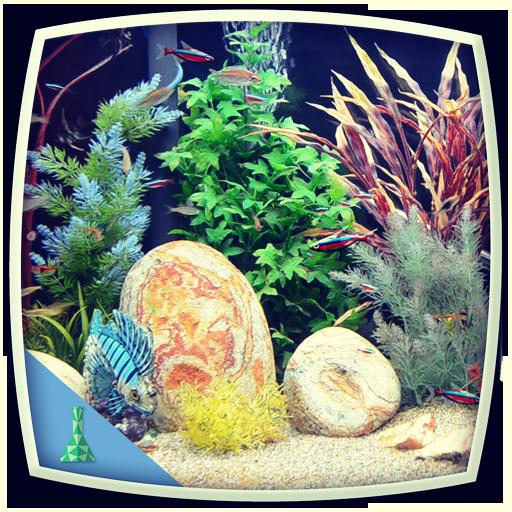 tropical-fish-aquarium-colourful-tank
