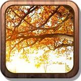 Autumn bright glare HD Live Wallpaper