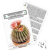 Außergewöhnliche Kakteen Samen mit hoher Keimrate - Sukkulenten Samen Set für deinen eigenen wunderschön blühenden…