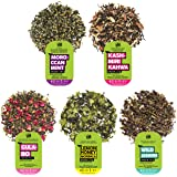 The Tea Trove Organic Green Tea Sampler - 5 Green Tea Collection, 40 Servings | 100% Natural Ingredients | Moroccan Mint…