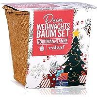 Weihnachtsbaum Anzucht Set I tolle Geschenk-Idee für Weihnachtsgeschenke, Wichtelgeschenke Weihnachten…