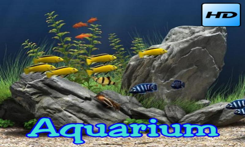 Aquarium - 2