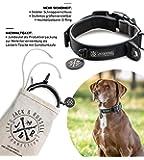 Jack & Russell Premium Hundehalsband Luna reflektierend und Neopren gepolstert Hunde Halsband div. Größen und Farben