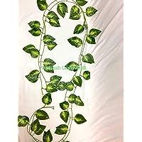 Badshah Craftsvilla® Textured Money Plant Creeper/Vines for Walls, Pillars, AC Pipes, Curtains and Hanging Baskets(Single Creeper Dimension)(L*B*H)(190 * 15 * 5cm)(Set of 2)