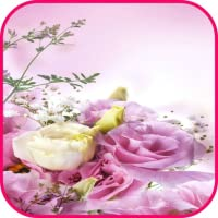 Flowers Wallpaper HD Background