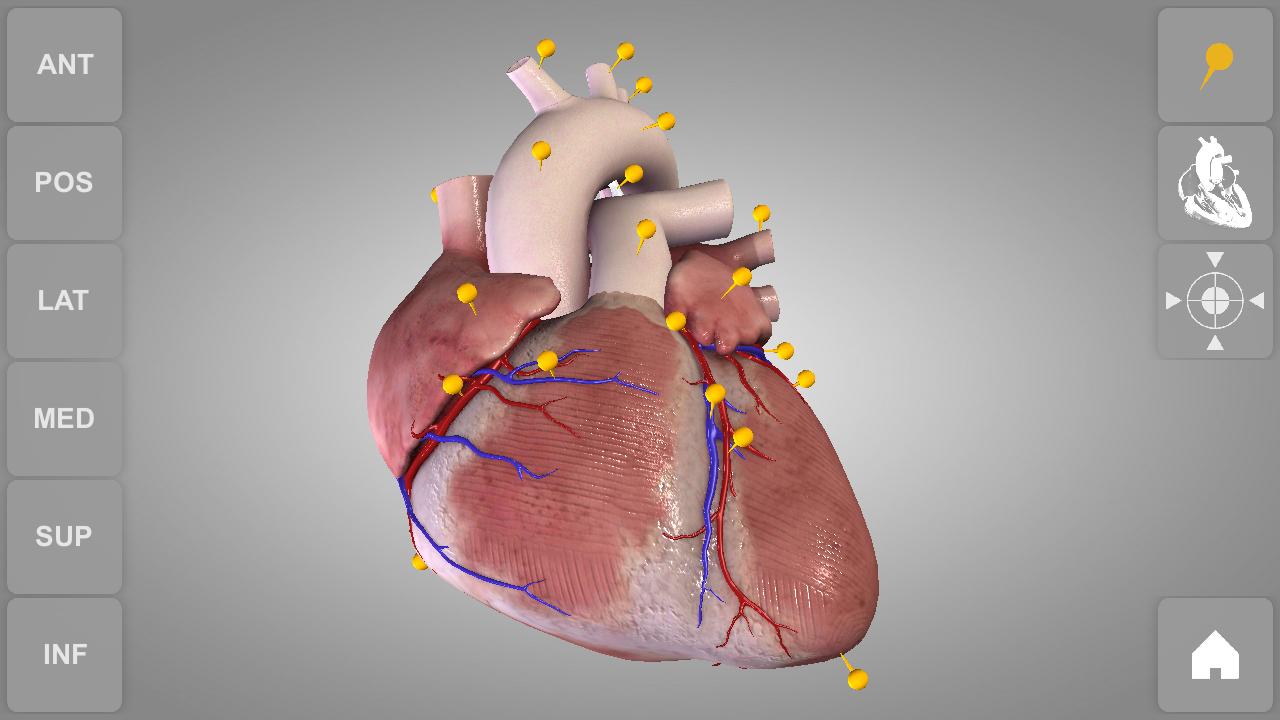 Beste Human Anatomy Of The Heart Bilder - Menschliche Anatomie ...