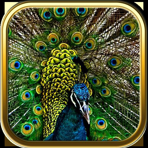 Peacock Jigsaw Puzzle Games (Für Peacock Spanisch)