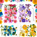 Fleurs Sechees Résine 131 Pièces Vraies Fleurs Pressées Sechees Naturelles Fleurs Séchées Multicolores pour Bougie Bricolage,