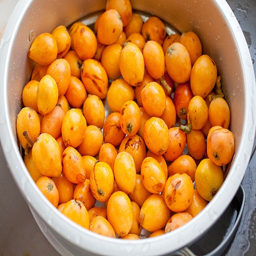 LOQUAT Fruit Application