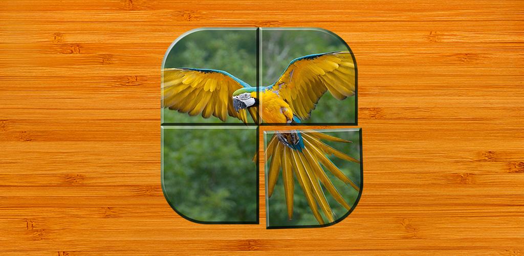 Vogel Spiele Kostenlos