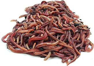 KOMPOSTWÜRMER kaufen - 500 Stück/Sack - Kompoststarter Regenwurm Set - Gartenwürmer/Regenwürmer Eisenia-Mix lebend - aktive Würmer für Kompost, Komposter, Wurmkomposter, Wurmkiste und Wurmfarm