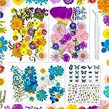 Fleurs Pressées Séchées Fleur Sechees Résine 202 PCS Fleurs Sechees Naturelles Fleur Artificielle pour Bougie Bricolage, étui