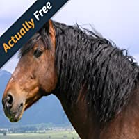 Top 20 Pferderassen