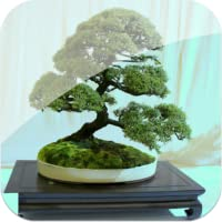 Bonsai Tree Creation