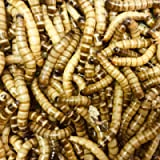 Free delivery 80g Morio Worms (approximately 100 / slim letterbox containers)