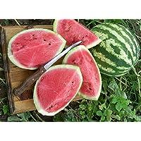 Premier Seeds Direct WML02 Water Melon Crimson Sweet Seeds (Pack of 90)