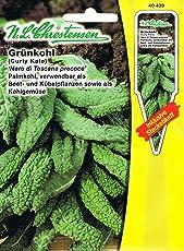 Grünkohl Palmkohl 'Nero di Toscana precoce' verwendbar als Beet- und Kübelpflanzen sowie als Kohlgemüse ( mit Stecketikett)
