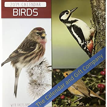 Birds 2019 Wall Calendar Amazoncouk Office Products