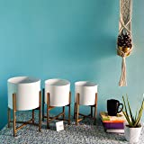 ecofynd Centuria Mid Century Metal Plant Pot Set | Indoor Round Planter with Metal Stand (Pot: White, Stand: Gold, All Three