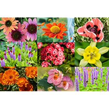 Mixed Perennial Flowers Seeds 2000 Rainbow Of Colours In Your