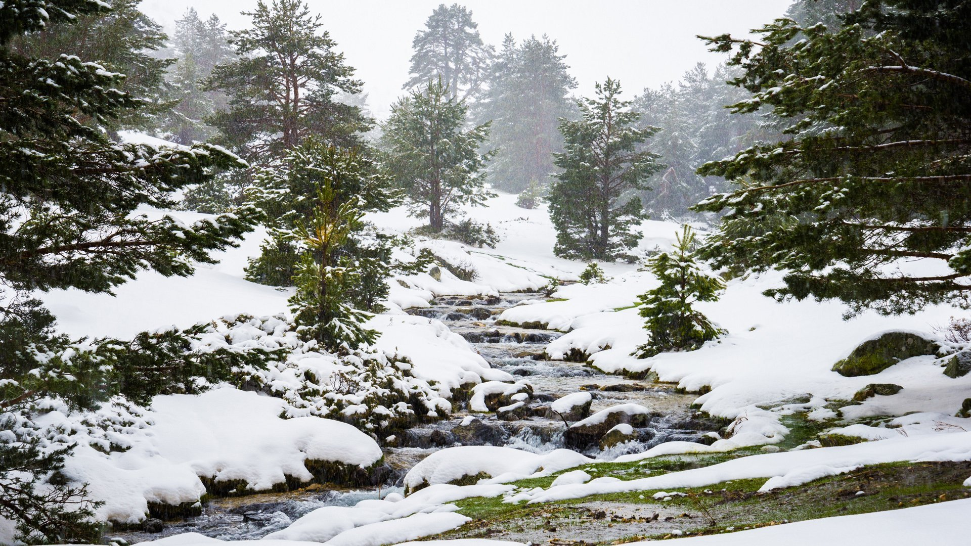 Peaceful Snowfall HD - 2
