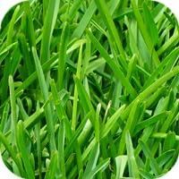 Grass Wallpapers