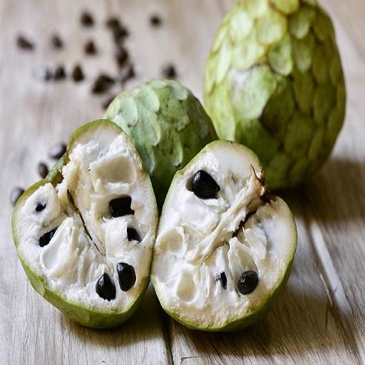CANTALOUPE Fruit Application - 2809