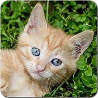 Katzen Spiele kostenlos