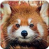 3D LiveLife Onderzetter van Kurk - Baby Rode Panda, Deluxebase. Lenticulaire 3D Kurk Dier Onderzetter. Antislip drinkmat met