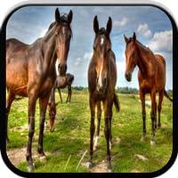 Tier-Spiele für Kids: Bauernhof