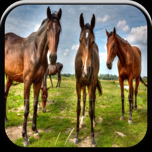 Tier Matching-spiel (Tier-Spiele für Kids: Bauernhof)