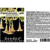 Seedeo® Engelstrompete gelb - Brugmansia suaveolens 10 Samen