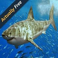 Haie der Welt