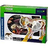 Tiger Anatomie Modell
