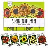 Semillas de girasol de colores con alta tasa de germinación - semillas de flores para un colorido y amigable jardín de abejas