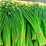 RWS cebollino ajo, Chino - Allium tuberosum (200 semillas)