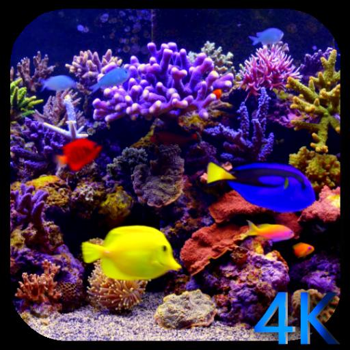 Aquarium 4K Video Live Wallpaper Amazoncouk Appstore For Android