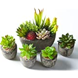 Jobary Set di 5 Piante Artificiali Succulente (Include 10 Piante), Colorate e Decorative Finte Piante con Pietre, Ideali per