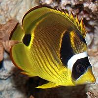 Marine Aquarium Fish 2