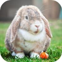 Fondos de pantalla de conejo