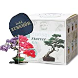 valeaf Bonsai Starter Kit - Summer Sale - Cultiva tu propio árbol bonsái - Juego de cultivo con 4 tipos de semillas de bonsái