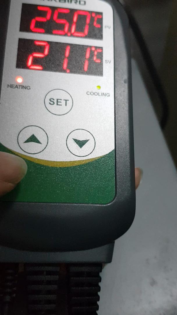 Inkbird ITC-308S Termostato Digital Calefaccion y Refrigeración con Sonda 220v Detachable, 2 Relés Control de Temperatura para Fabricación de Cerveza, ...