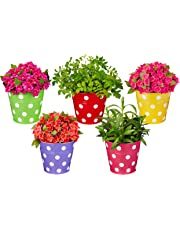 Solimo Corrosion Resistant Hanging Planter