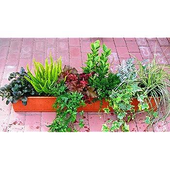 winterharte balkonpflanzen im set 7 immergr ne pflanzen f r 80 cm balkonk sten garten. Black Bedroom Furniture Sets. Home Design Ideas