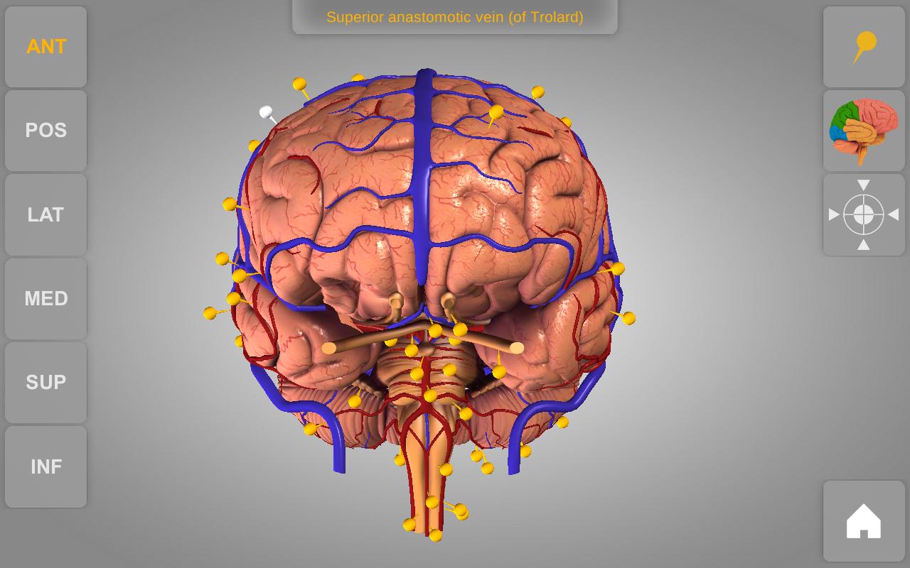 Brain - 3D Atlas of Anatomy: Amazon.de: Apps für Android