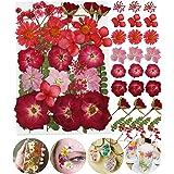 Fleurs pressé séchées naturelles mélangées multiples pour l'artisanat de bricolage-marguerites de colorées pour bricolage bou