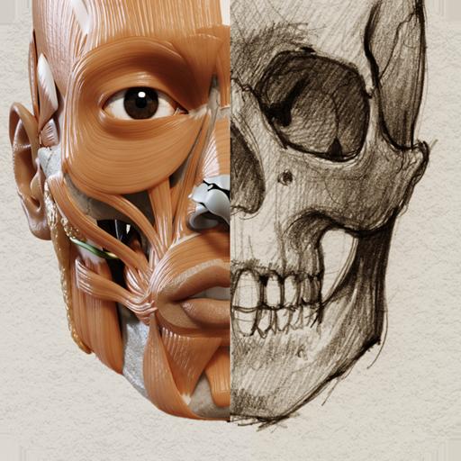 3D-Anatomie für den Künstler: Amazon.de: Apps für Android