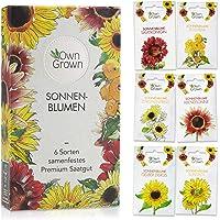 Sonnenblumen Samen Set: Premium Sonnenblumen Saatgut mit 6 Sorten schöner Sommerblumen Samen - Garten Geschenk…