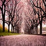 Sakura Flower Live Wallpaper Best
