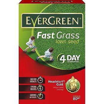 Evergreen Garden Care Ltd Fast Grass Lawn Seed Carton, 2.4 kg